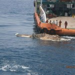 Picture: Strange Creature Found by the Iranian Navy Ship in Persian Gulf