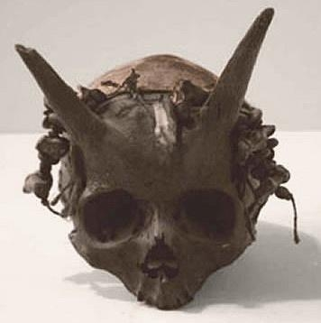 Picture about Horned Nephilim Skeletons Found in Valley of Giants