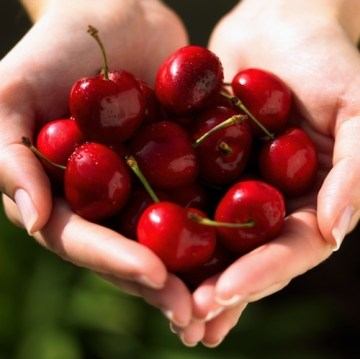 Picture about Cherries Can Cause Cancer Cells to Kill Themselves