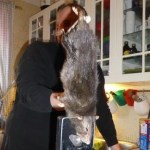 Picture of 15 Inch Monster Ratzilla Terrorizes a Swedish Family