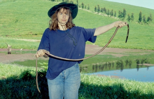 Picture of Giant Gippsland Earthworm (Megascolides australis)