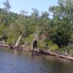 Picture about Bigfoot Caught on Camera by Virginia Man