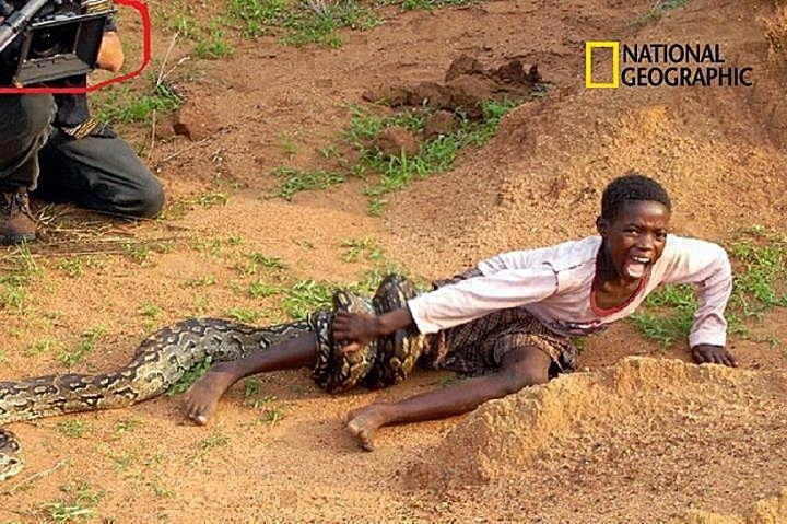 Picture about Boy Attacked by Snake as Photographers Watch