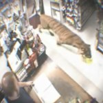 Picture from Video of Tiger Walking into Store, Causing Panic