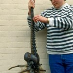 Picture about Giant Antarctic Sea Spider
