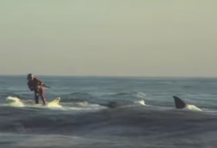 Picture about Video of Surfer Towed by Great White Shark