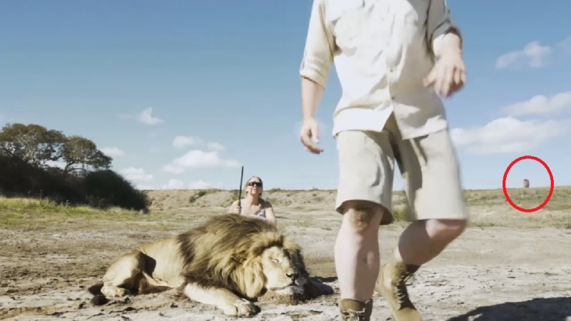 Picture about Lion Takes Revenge On Trophy Hunter, Video