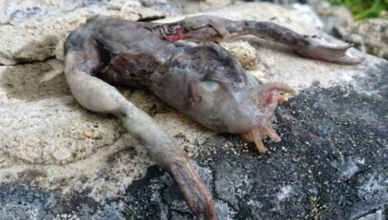 Picture about Bizarre Alien Creature Found Outside Couple's Home in Norway