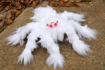 Image about Photograph of Albino Spider Discovered in Australia