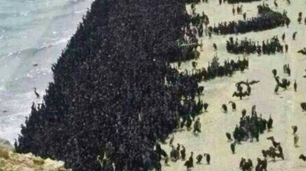 Picture Suggesting Millions of Birds Gather Unnaturally at Ras Al Khaimah Beach in UAE