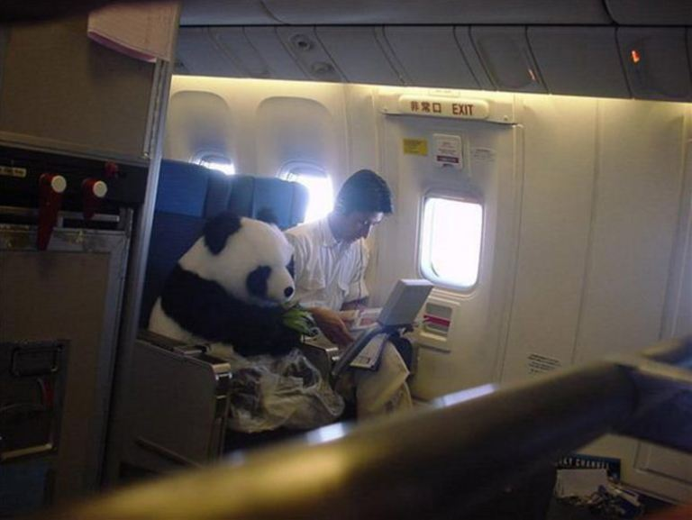 Picture about Photograph of Panda Flown on a Plane