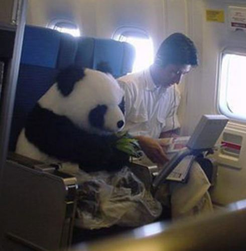 Close up view: Photograph of Panda Flown on a Plane