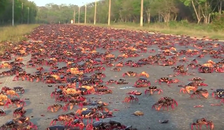 Crab Invasion After Hurricane Irma in Florida: Video – Hoax