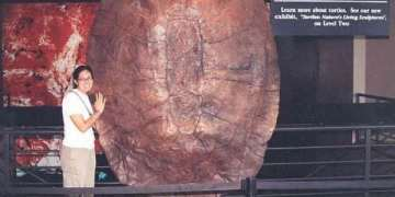 World's Largest Turtle Shell Ever Photograph