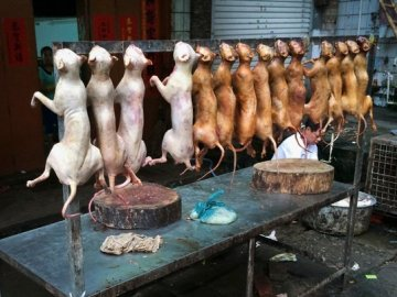 Picture about Dog Meat Sale Allowed in Los Angeles Restaurant