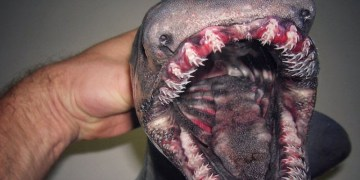 Image of Bizarre Fish Caught in Russian Deep Sea