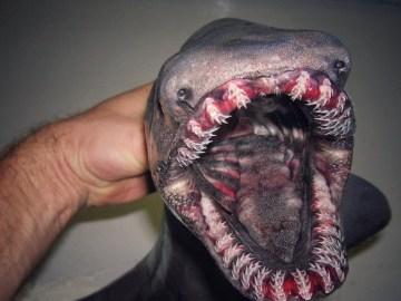 Image of Bizarre Fish Caught in Russian Deep Sea