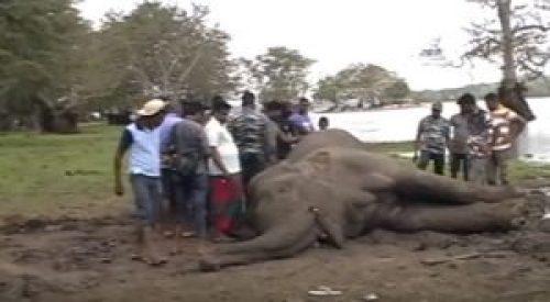 Image of Locals around the dead elephant in Anuradhapura (Sri Lanka)