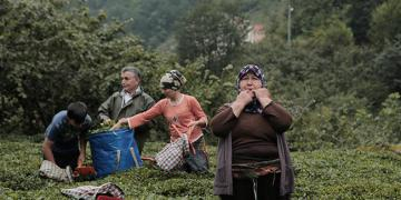 Image Showing Turkish Village Residents Speak Whistled Bird Language
