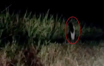 Image about One-Legged Ghost Gong Goi Spotted in Thailand
