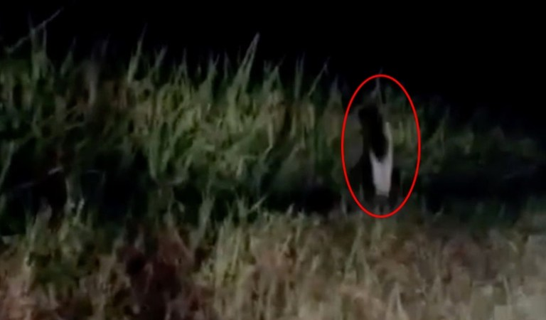 One-Legged Ghost Gong Goi Spotted in Thailand: Fact Check