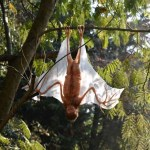 Image about Alien Similar to Bat Found at Kerala Tamil Nadu Border
