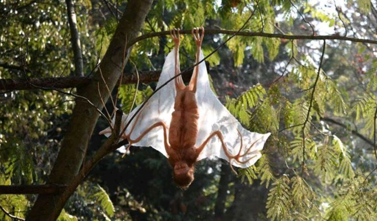 Alien Similar to Bat Found at Kerala Tamil Nadu Border: Fact Check