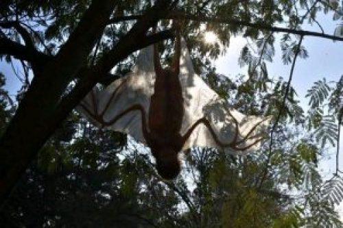 Image about Alien Similar to Bat Found at Kerala Tamil Nadu Border