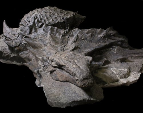 Image of Armored Nodasaurus Specimen (Courtesy of Royal Tyrrell Museum, Drumheller, Canada)