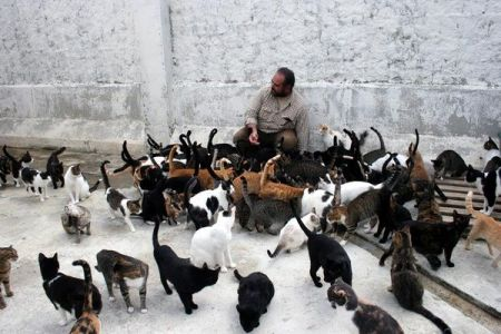Original picture of an Unidentified man feeding a group of Cats