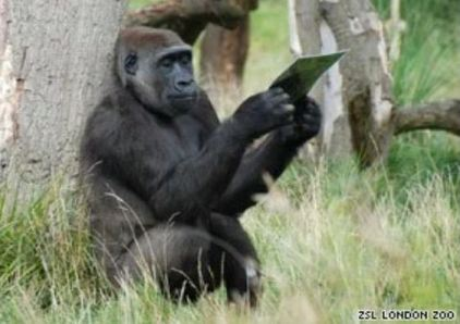 Original picture of Gorilla holding a photograph of another incoming Gorilla