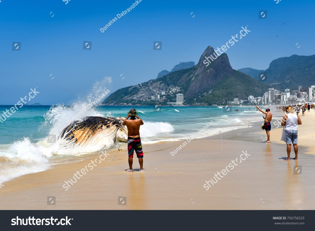 Stock photograph of people clicking pics of the dead Whale