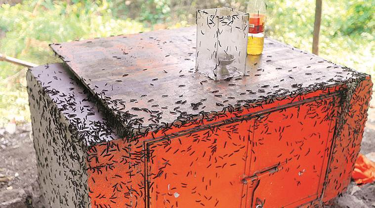 Image about Thousands of Strange Insects Attack Mumbai, People Panic