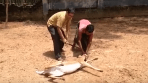 Image about West Bengal Forest Officer Shot and Killed a Deer, Video