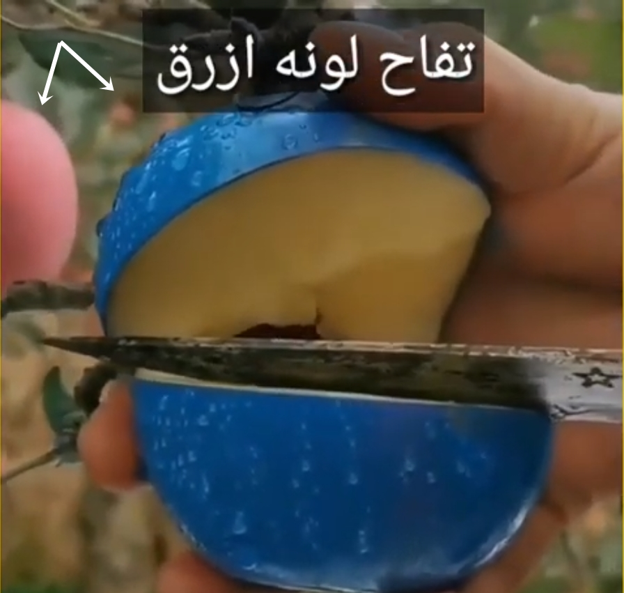 Image of Similar blue-painted apple with real ones in background
