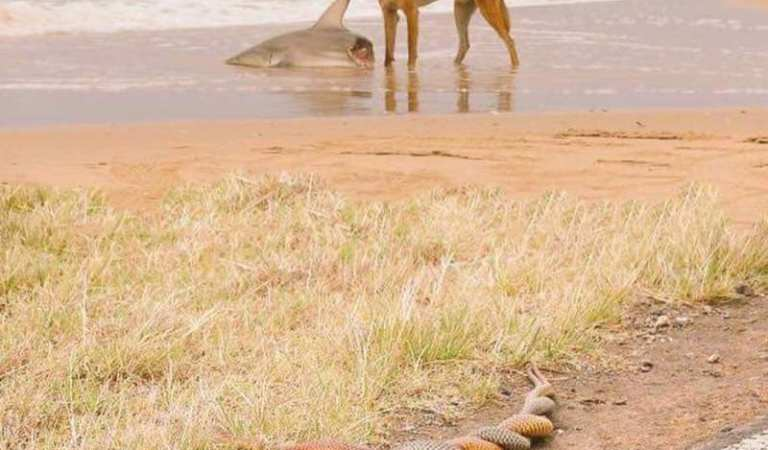 Dog Eating Shark in Australia While Snakes Mate, Photograph: Fact Check