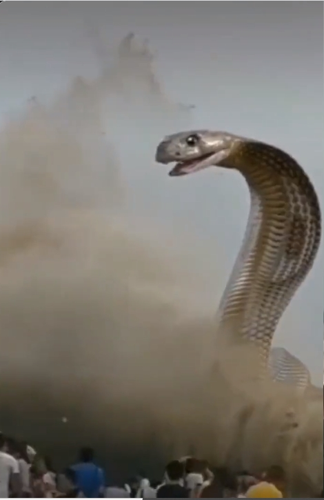 Image about Giant Cobra Snake Rising Out of River Water, Video