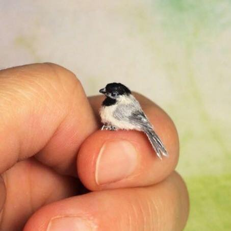 Image about Photograph of World's Smallest Bird Zunzuncito
