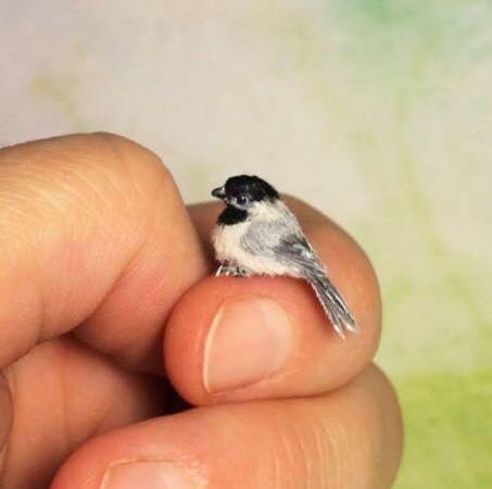 Photograph of World's Smallest Bird Zunzuncito: Fact Check