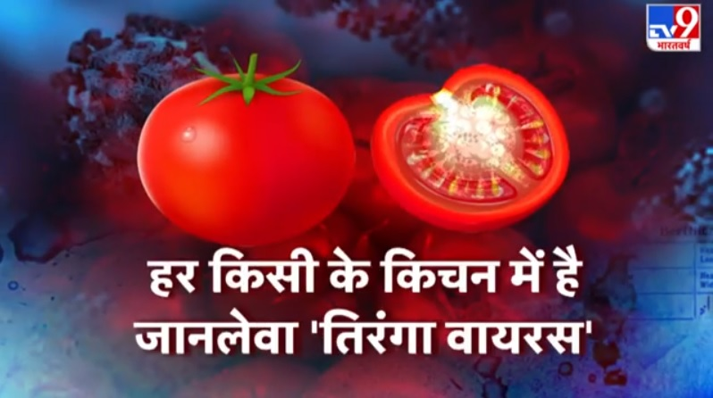 Image about Deadly New Tiranga Virus in Tomato Crops of Maharashtra