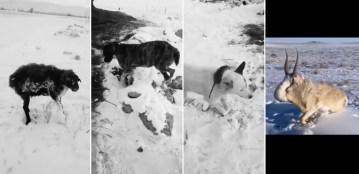 Image about Animals Frozen Alive in -51⁰ Kazakhstan, Shocking Video