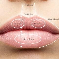 Lip Anatomy Diagram 2001 Chevy Tahoe Radio Wiring Of Human Lips Parts The Elsavadorla