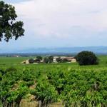 Vinmarker i Châteauneuf-du-Pape.