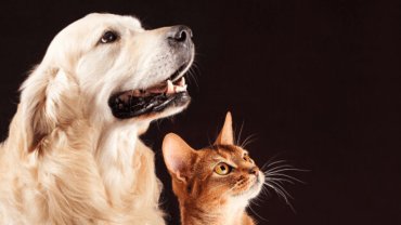 Dog and cat staring
