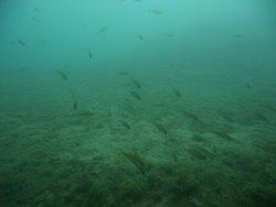 Barschberge unter Wasser