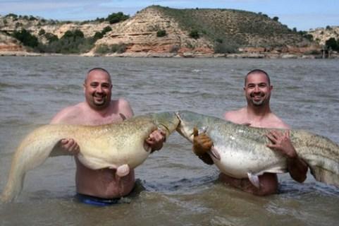 Doppeltes Anglerglück gleich 2 Großwelse gefangen am Ebro in Spanien