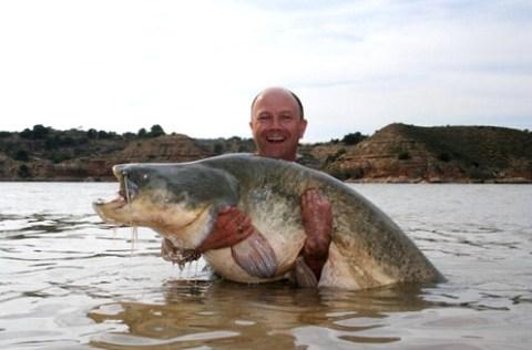 Riesenwaller im Ebro gefangen