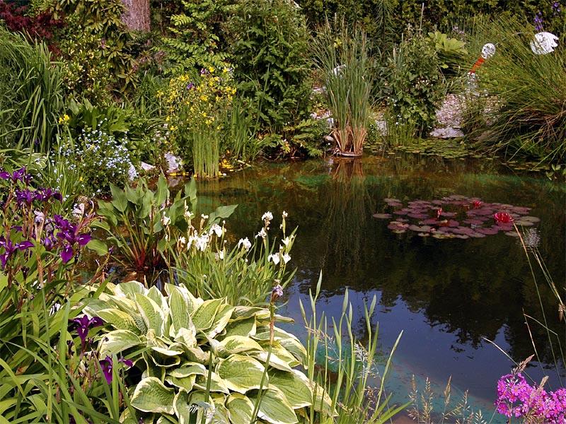 Gartenteich Biotop Seerosen Libellen Iris Hobbygartencom