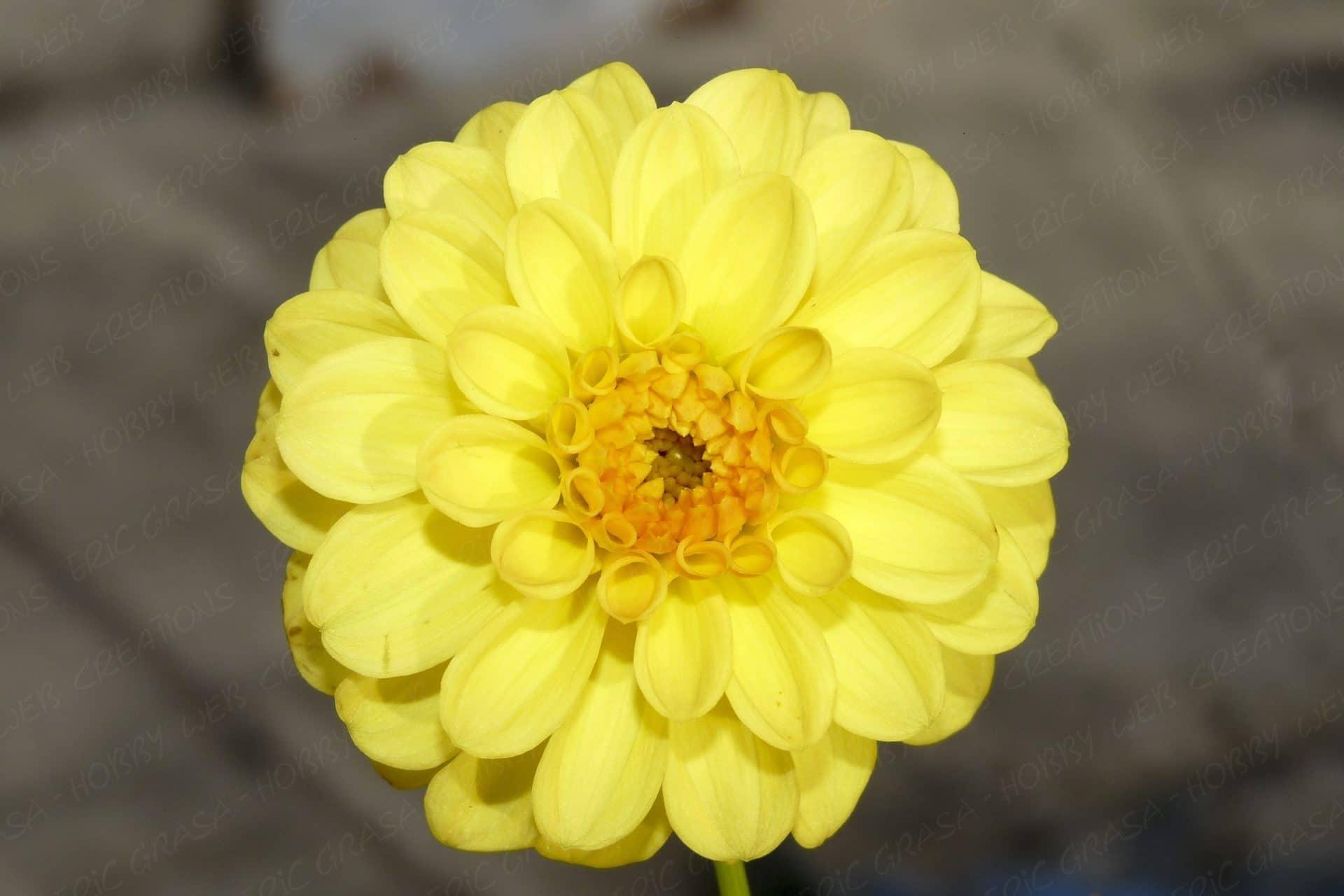 Fleurs au 23-11-2014