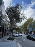 Here's a street much like Rodeo Drive with super fancy shops